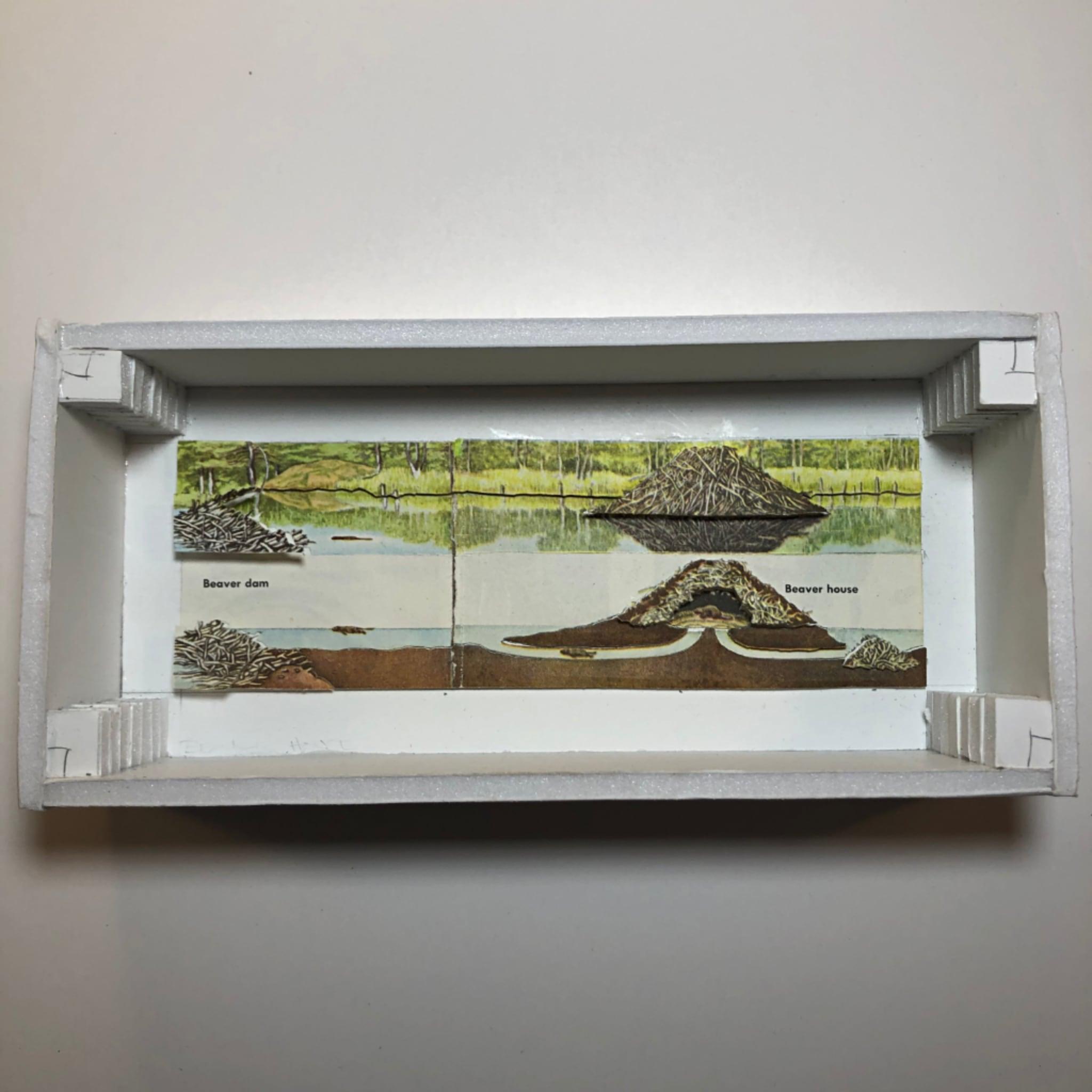 Diorama beaver house sm 2x